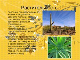 Растительность. Растения, произрастающие в жарких и засушливых условиях пусты