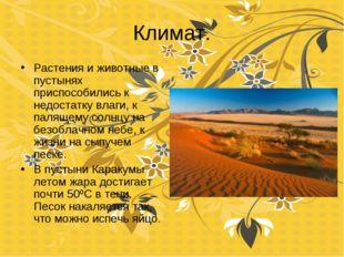 Климат. Растения и животные в пустынях приспособились к недостатку влаги, к п