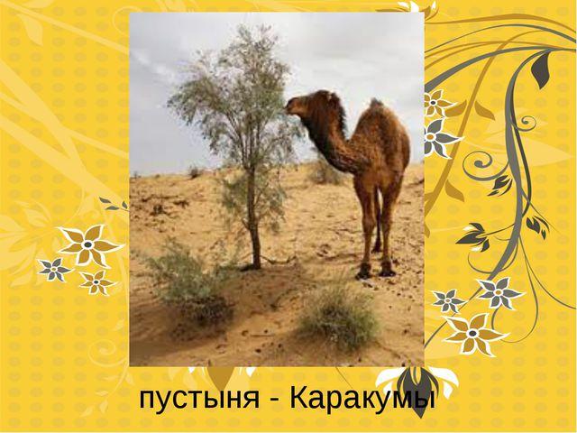 пустыня - Каракумы