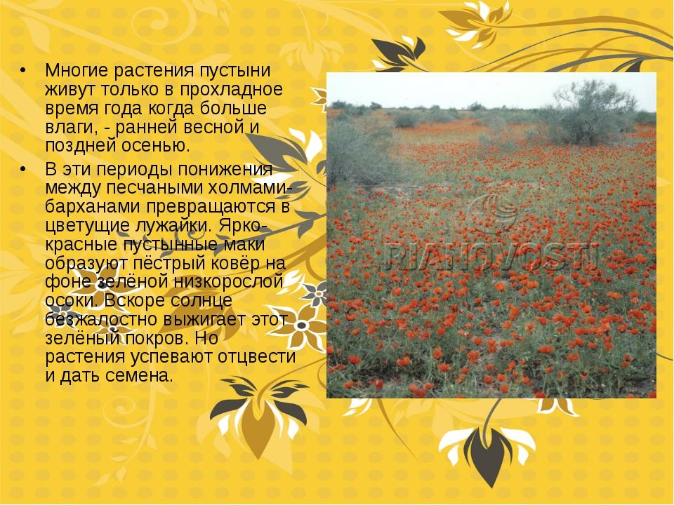 Многие растения пустыни живут только в прохладное время года когда больше вла...