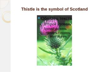 Thistle is the symbol of Scotland