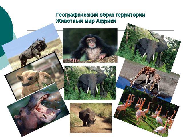 Географический образ территории Животный мир Африки