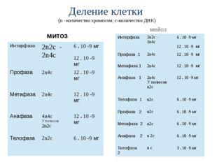 Деление клетки (n –количество хромосом; c-количество ДНК) митоз мейоз Интерфа