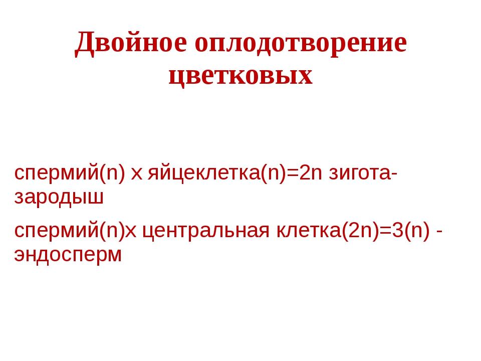 Двойное оплодотворение цветковых спермий(n) х яйцеклетка(n)=2n зигота-зародыш...