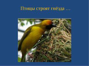 Птицы строят гнёзда …