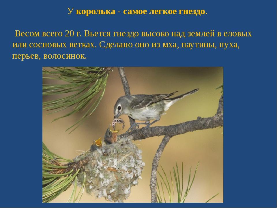 Укоролька-самое легкое гнездо. Весом всего 20 г. Вьется гнездо высоко над...
