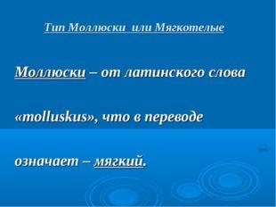 Тип Моллюски или Мягкотелые Моллюски – от латинского слова «molluskus», что в