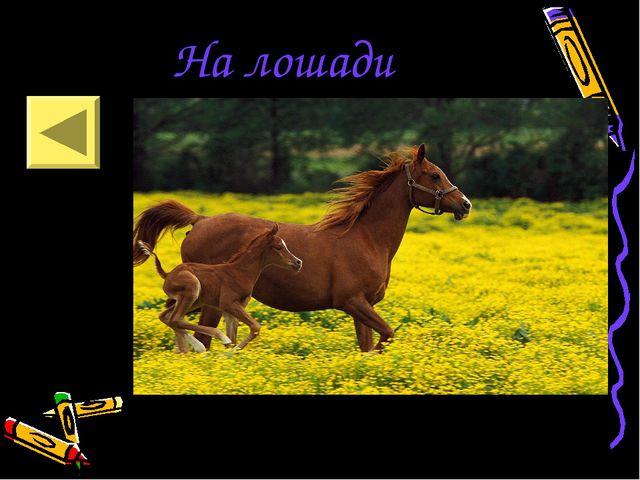 На лошади