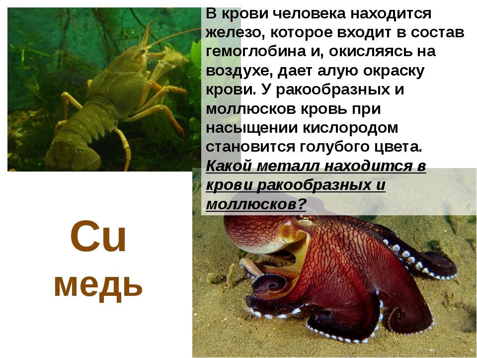 Жалящее действие крапивы, пчел и некоторых медуз связано с действием органиче...