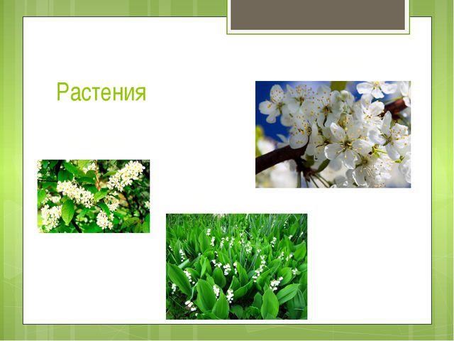 Растения Вишня Черемуха Ландыши
