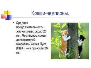 Кошки-чемпионы. Средняя продолжительность жизни кошек около 20 лет. Чемпионом