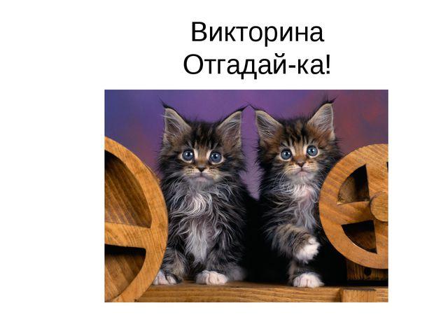 Викторина Отгадай-ка!