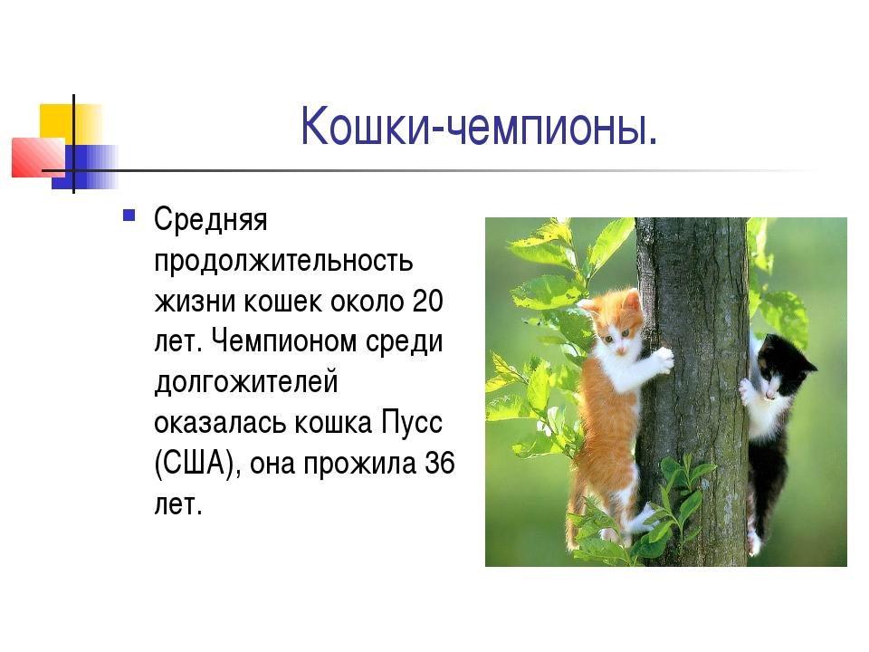 Кошки-чемпионы. Средняя продолжительность жизни кошек около 20 лет. Чемпионом...