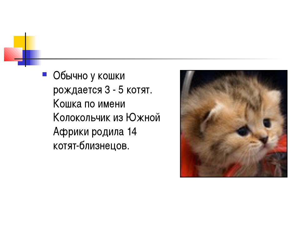 Обычно у кошки рождается 3 - 5 котят. Кошка по имени Колокольчик из Южной Афр...
