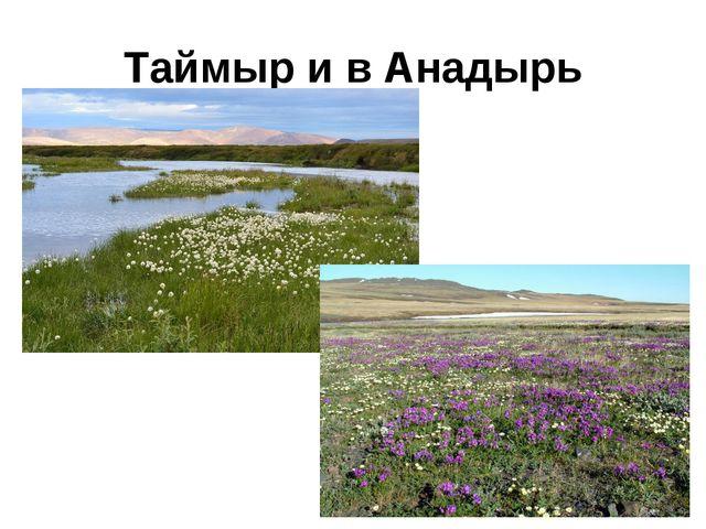 Таймыр и в Анадырь