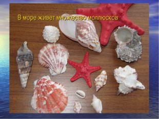 В море живет множество моллюсков