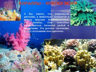 Кораллы А Вы знаете, что кораллыне растения, а животные? Относятся к классу