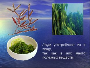 Люди употребляют их в пищу, так как в них много полезных веществ.