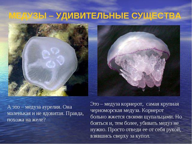 А это – медуза аурелия. Она маленькая и не ядовитая. Правда, похожа на желе?...