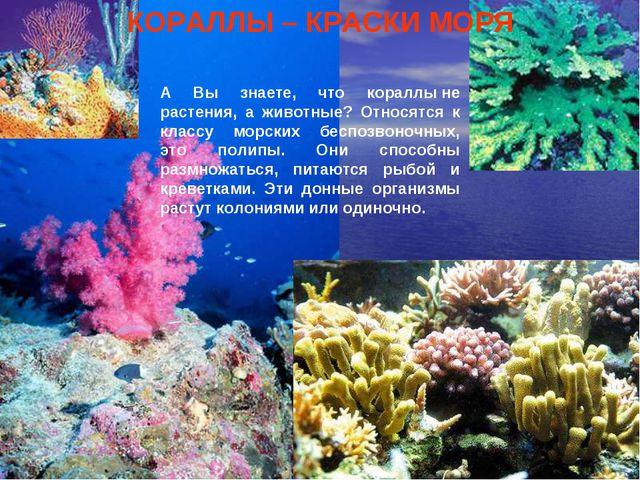 Кораллы А Вы знаете, что кораллыне растения, а животные? Относятся к классу...