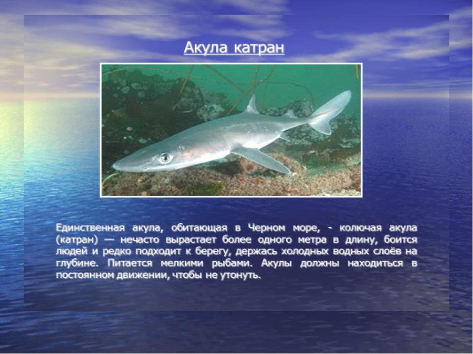технику камаз на чёрном море есть акулы самых популярных
