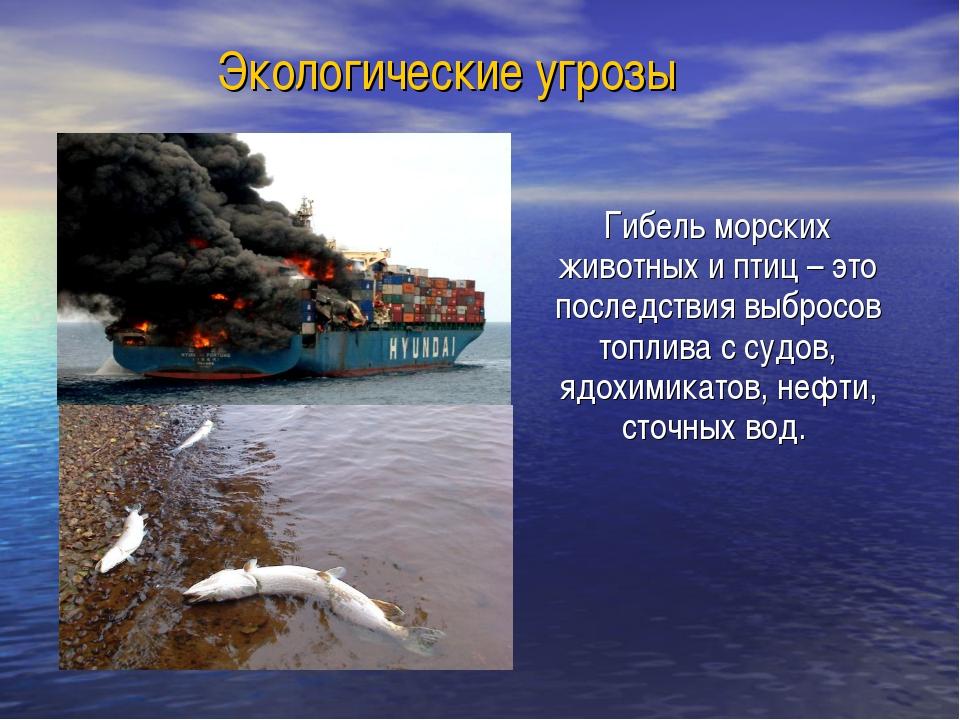 Экологические угрозы Гибель морских животных и птиц – это последствия выброс...