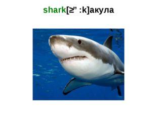 shark[ʃɑ:k]акула