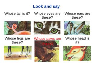 Look and say Whose paws are these? Whose tail is it?Whose eyes are these?Wh