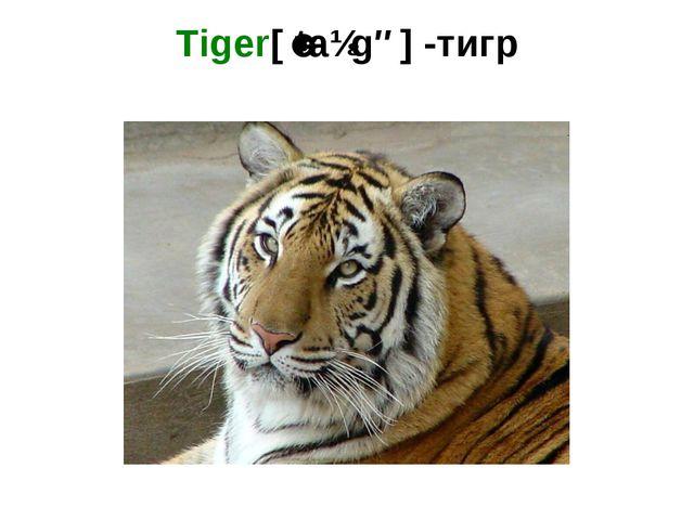 Tiger[ˈtaɪgə] -тигр