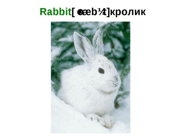 Rabbit[ˈræbɪt]кролик