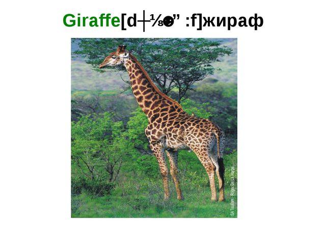 Giraffe[dʒɪˈrɑ:f]жираф