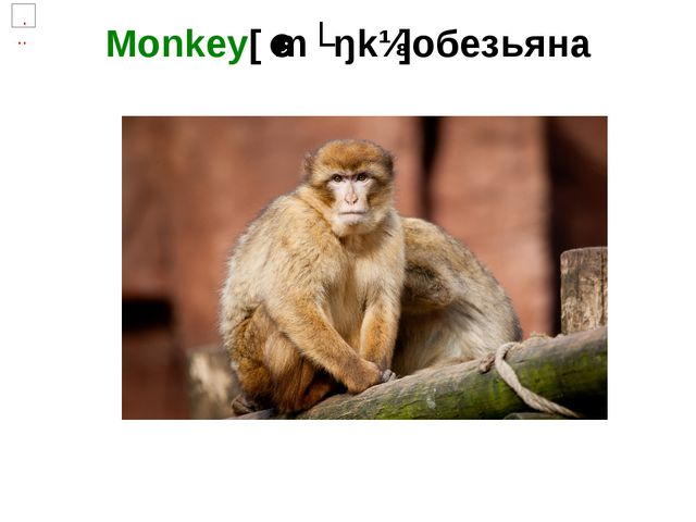 Monkey[ˈmʌŋkɪ]обезьяна