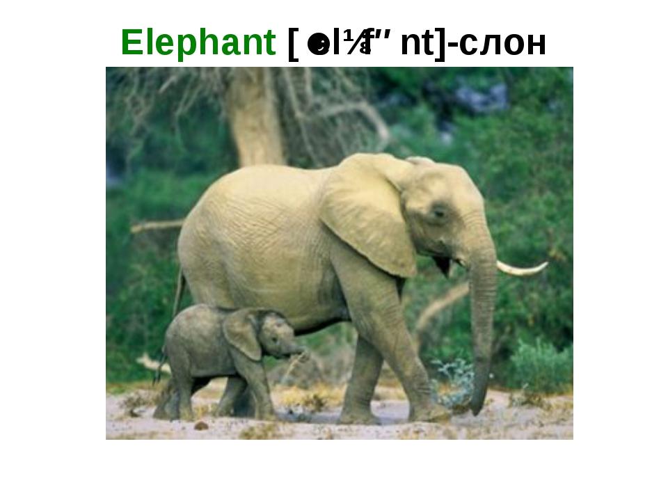 Elephant [ˈelɪfənt]-слон