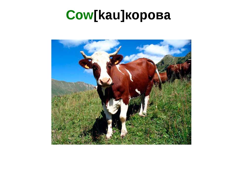 Cow[kau]корова