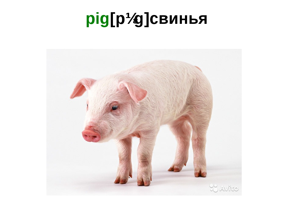 pig[pɪg]свинья