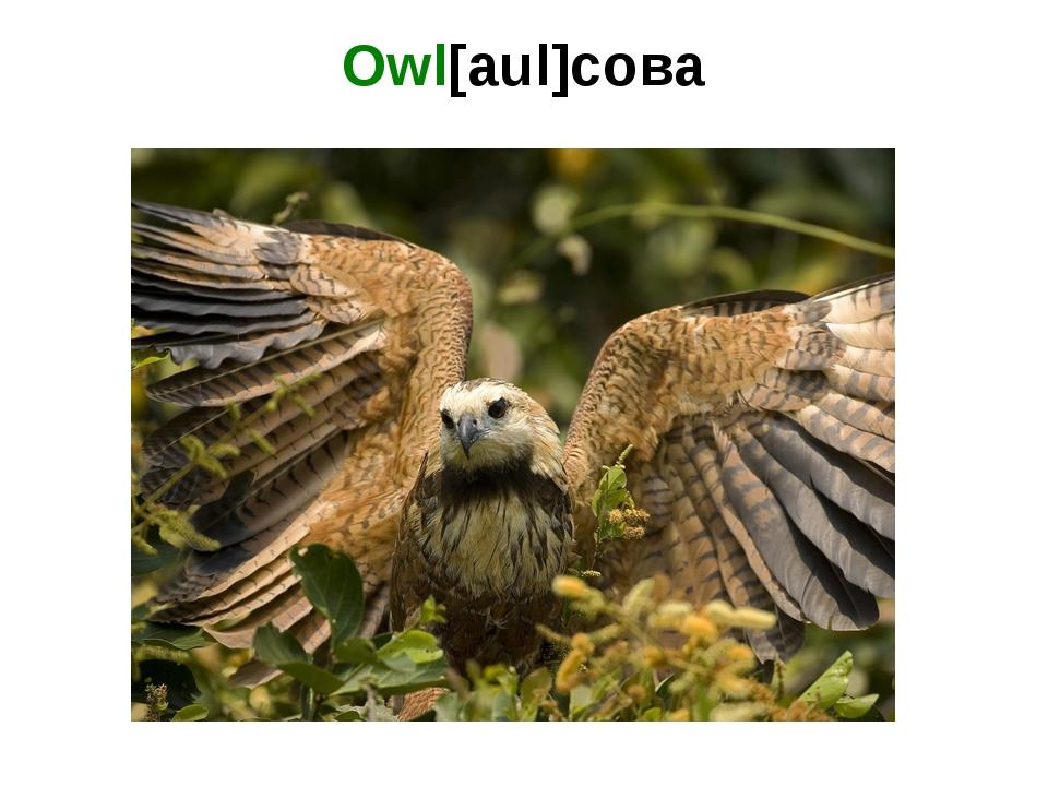 Owl[aul]сова