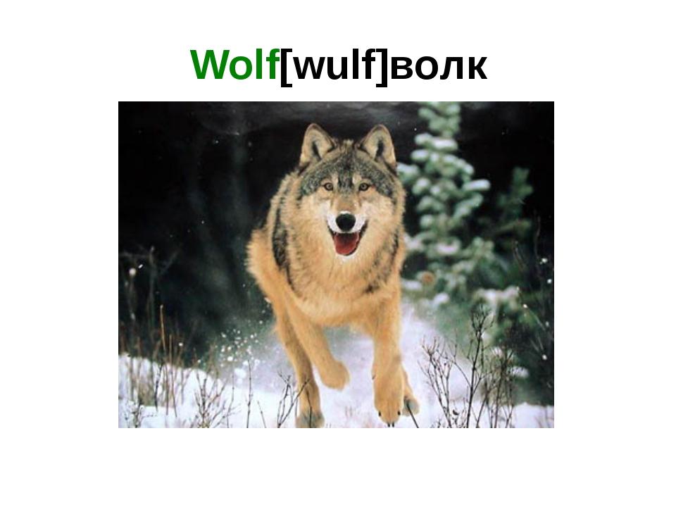 Wolf[wulf]волк