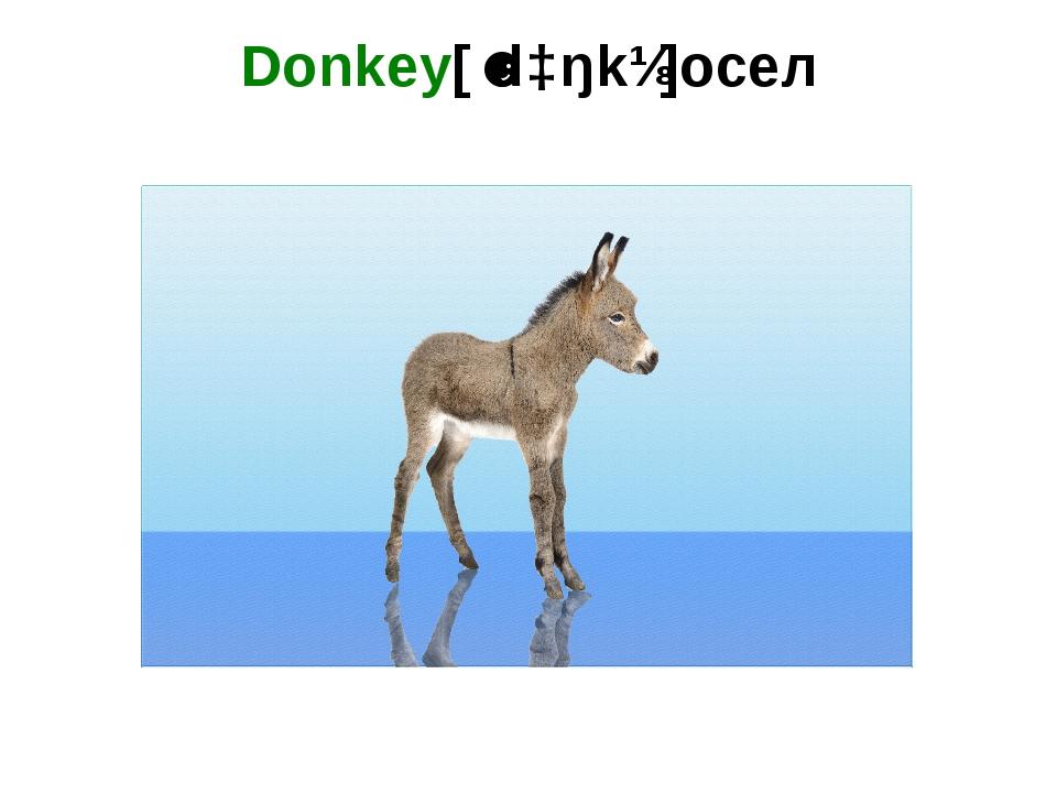 Donkey[ˈdɔŋkɪ]осел