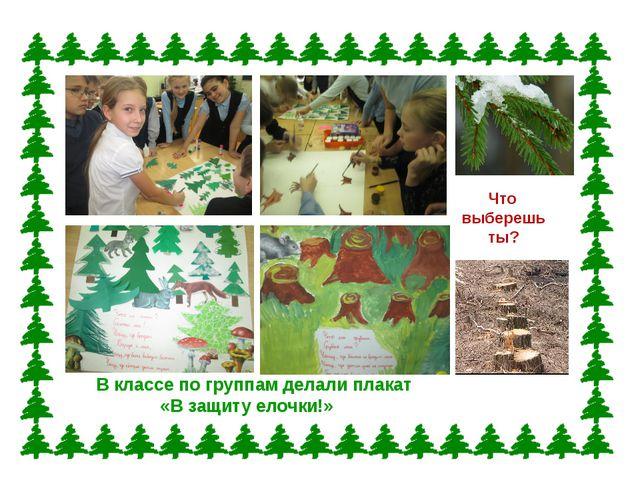 В классе по группам делали плакат «В защиту елочки!» Что выберешь ты?