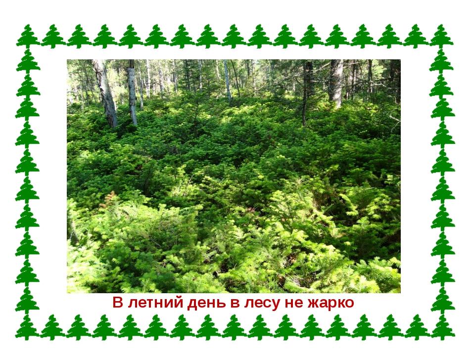 В летний день в лесу не жарко