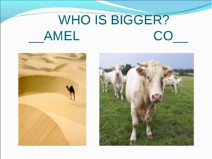 WHO IS BIGGER? __AMEL CO__