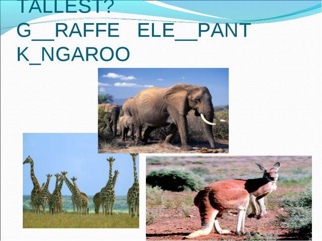 WHO IS THE TALLEST? G__RAFFE ELE__PANT K_NGAROO