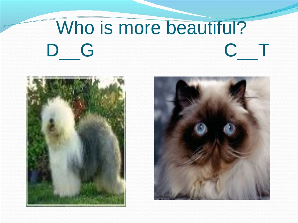 Who is more beautiful? D__G C__T