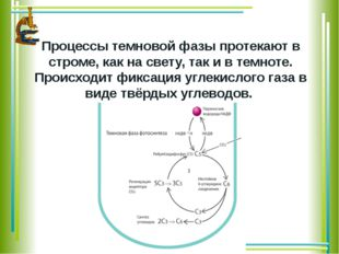 Процессы темновой фазы протекаютв строме,как на свету, так и в темноте. Пр