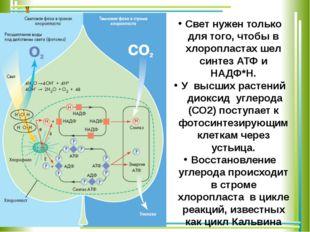 Свет нужен только для того, чтобы в хлоропластах шел синтез АТФ и НАДФ*Н. У