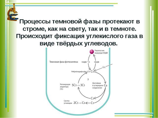 Процессы темновой фазы протекаютв строме,как на свету, так и в темноте. Пр...