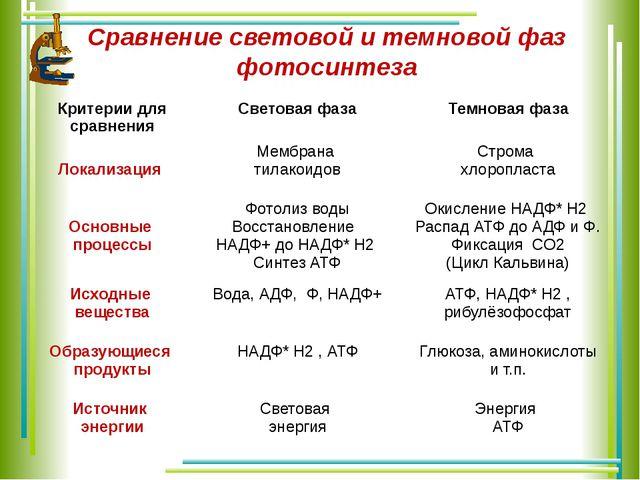 Сравнение световой и темновой фаз фотосинтеза Критерии для сравнения Световая...