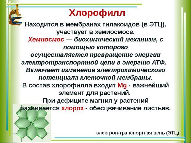 Находится в мембранах тилакоидов (в ЭТЦ), участвует в хемиосмосе. Хемиосмос—...