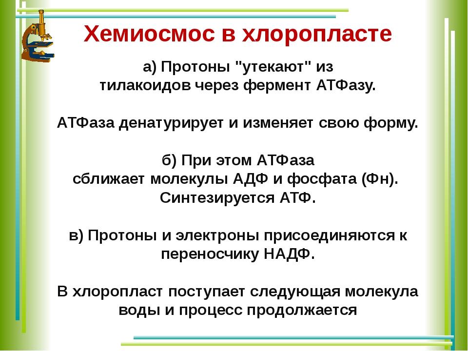 """а)Протоны""""утекают""""из тилакоидовчерезферментАТФазу. АТФаза денатурирует..."""