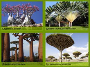 Лесами покрыто всего 10%.Основная масса расположена на востоке Природные бога